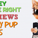 Money Pup Loans Review 2017 — Online Personal Loans Up to $2,500 🐶